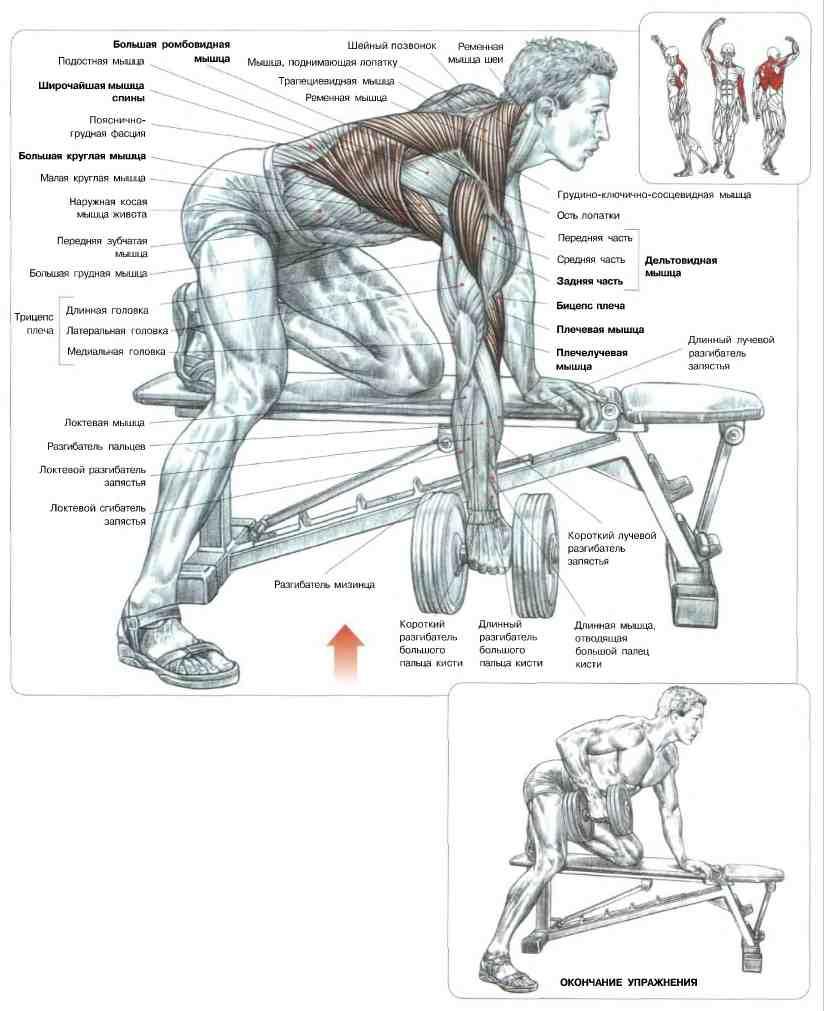 Схема прокачки всех мышц для девушек