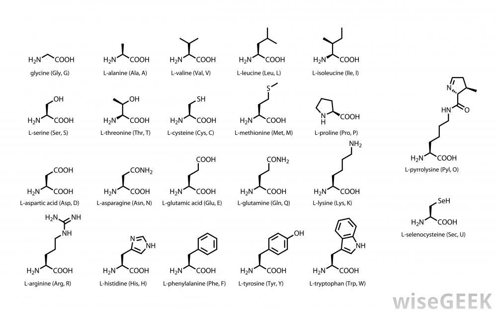 diagram-of-the-22-amino-acids (1)