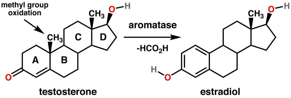 Testosterone_estradiol_conversion